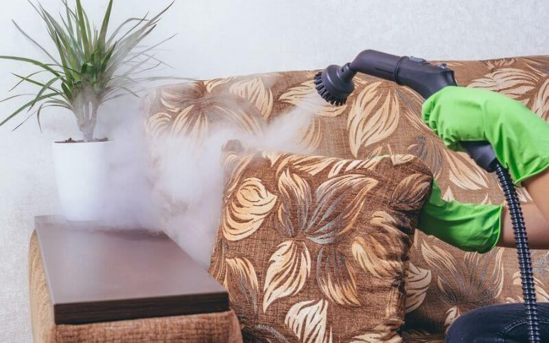 steam clean bed bugs